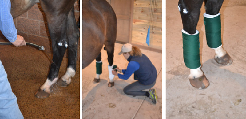 equine rehabilitation
